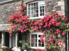 Tremaine Green Country Cottages - Cornwall