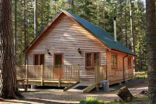 Cheap Dog Friendly Accommodation New Forest